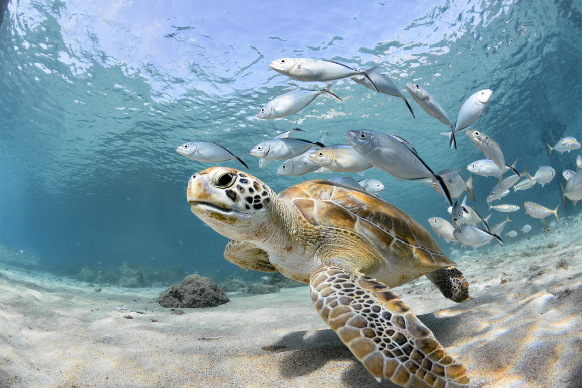 tortue de mer océans poissons eau fonds marins