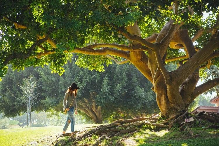 arbre de ville femme tronc racine nature