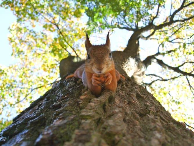 arbre tronc animal faune nature écureuil