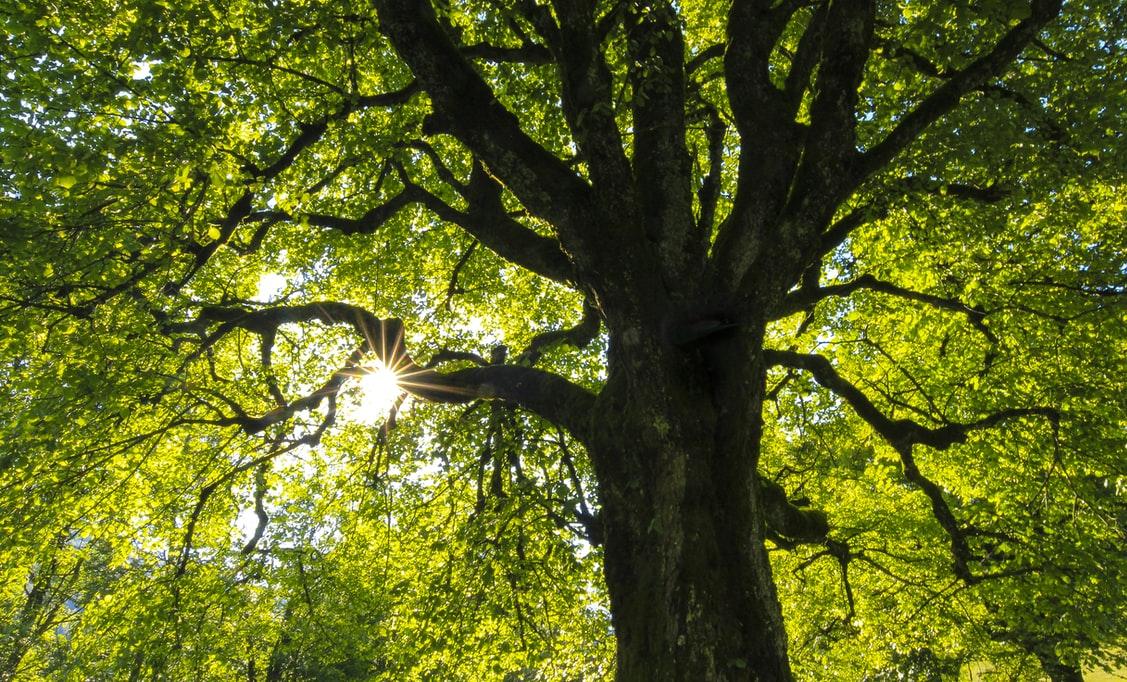 arbre tronc arbres verts nature foret