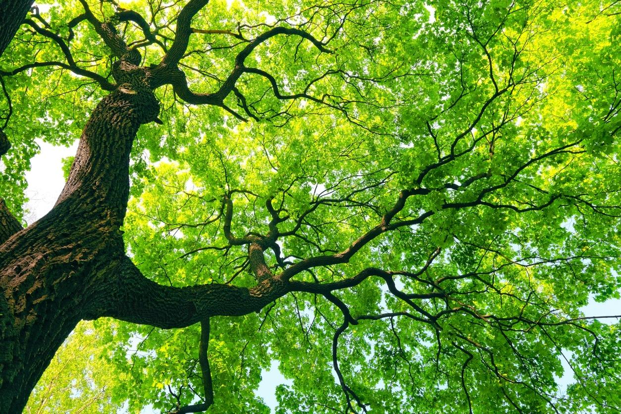 arbre vert printemps branches feuilles protéger nature forêt