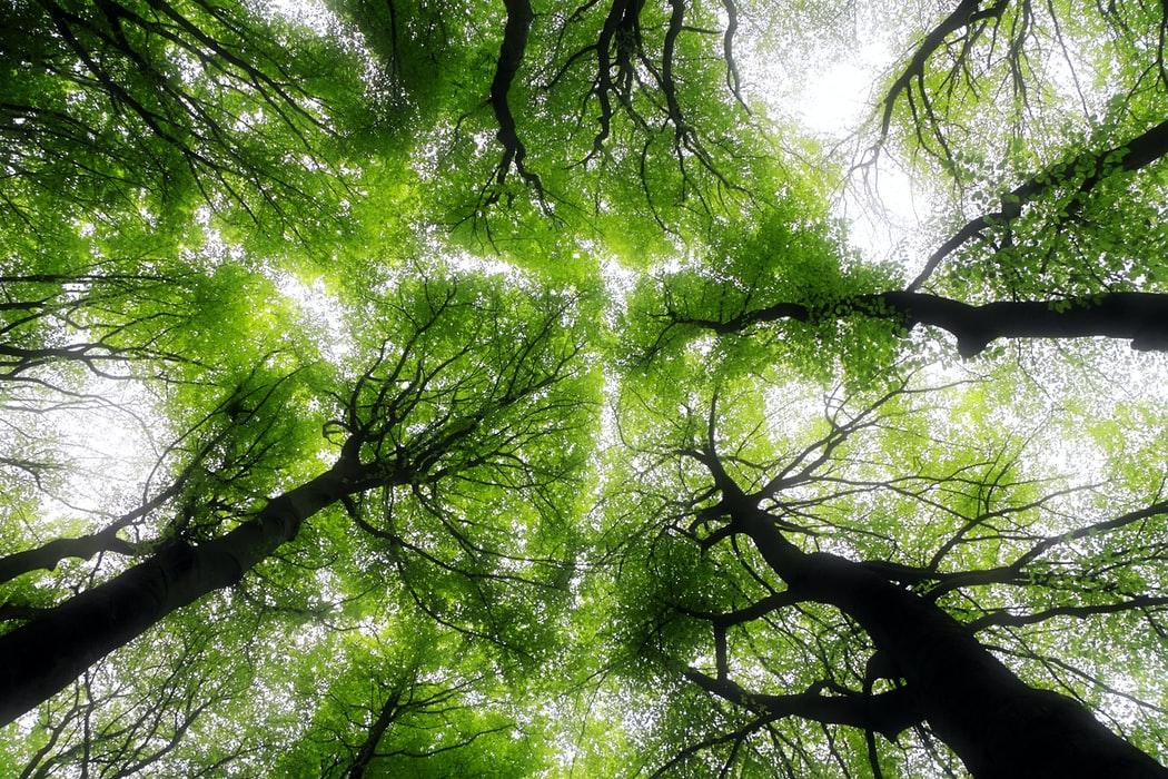 arbres ciel bienfaits feuilles tronc nature foret