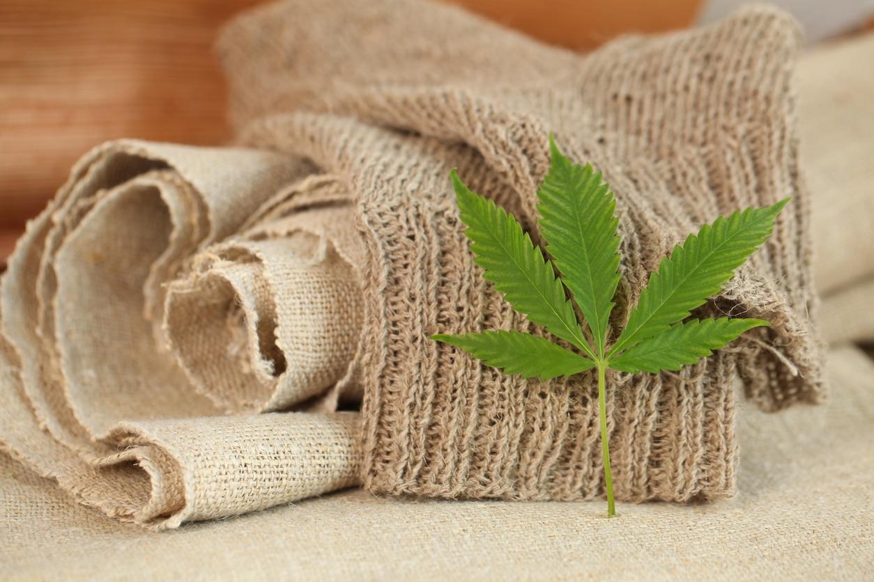 feuilles de chanvre textile tissu plante