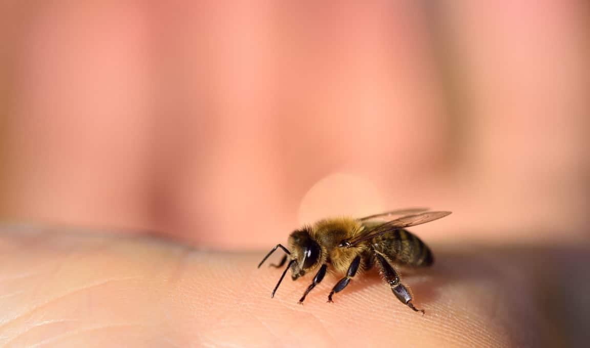 insecte abeille doigt main piqûres insectes remèdes naturels