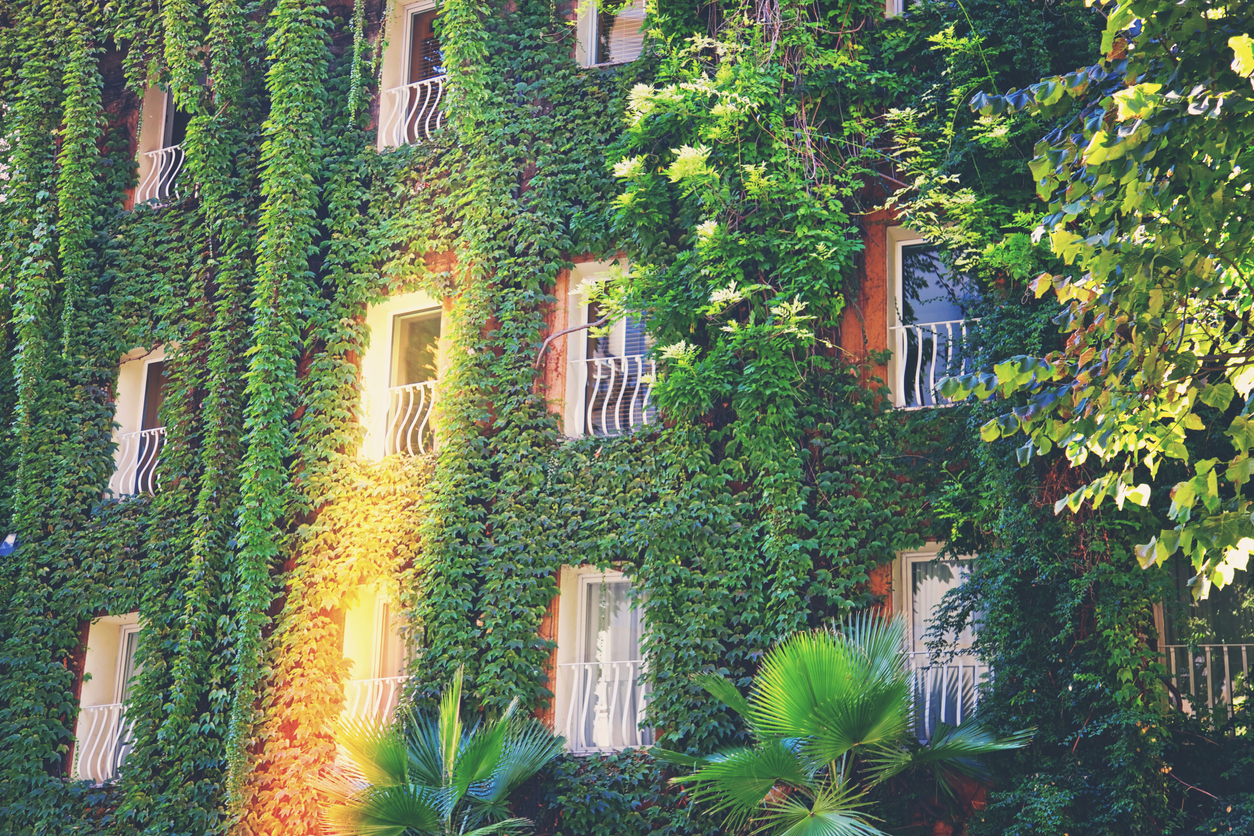 plantes vertes jardin vertical immeuble végétalisé végétalisation ville
