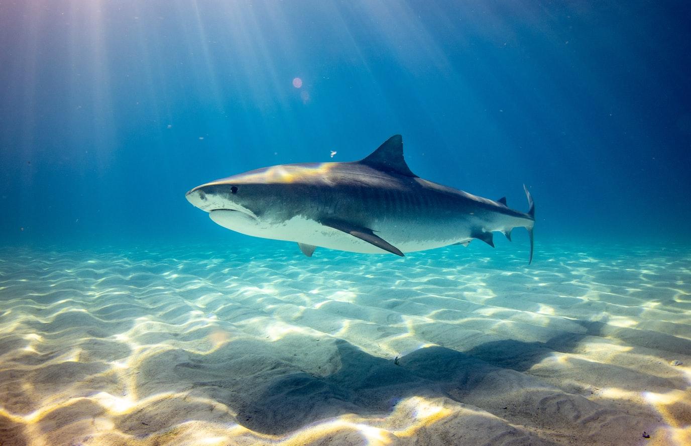 requin eau mer océan poisson protection