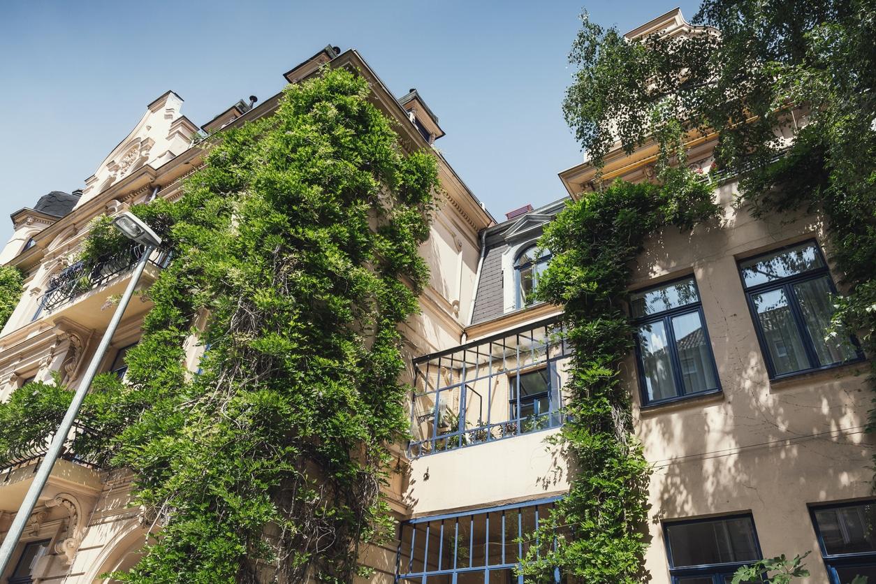 ville verte végétalisation immeubles mur végétaux plantes grimpantes appartement