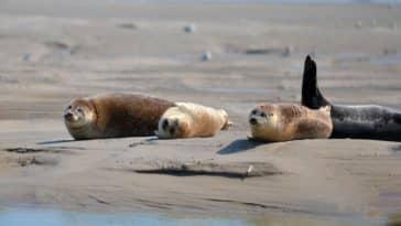 baie de somme animaux phoques plage mer Normandie destination nature