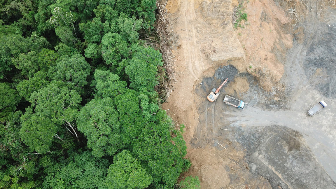Déforestation arbres terrain hommes forêt culture aliments