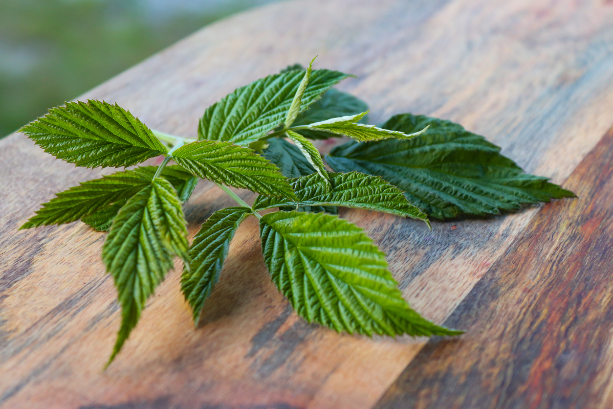feuilles de framboisier