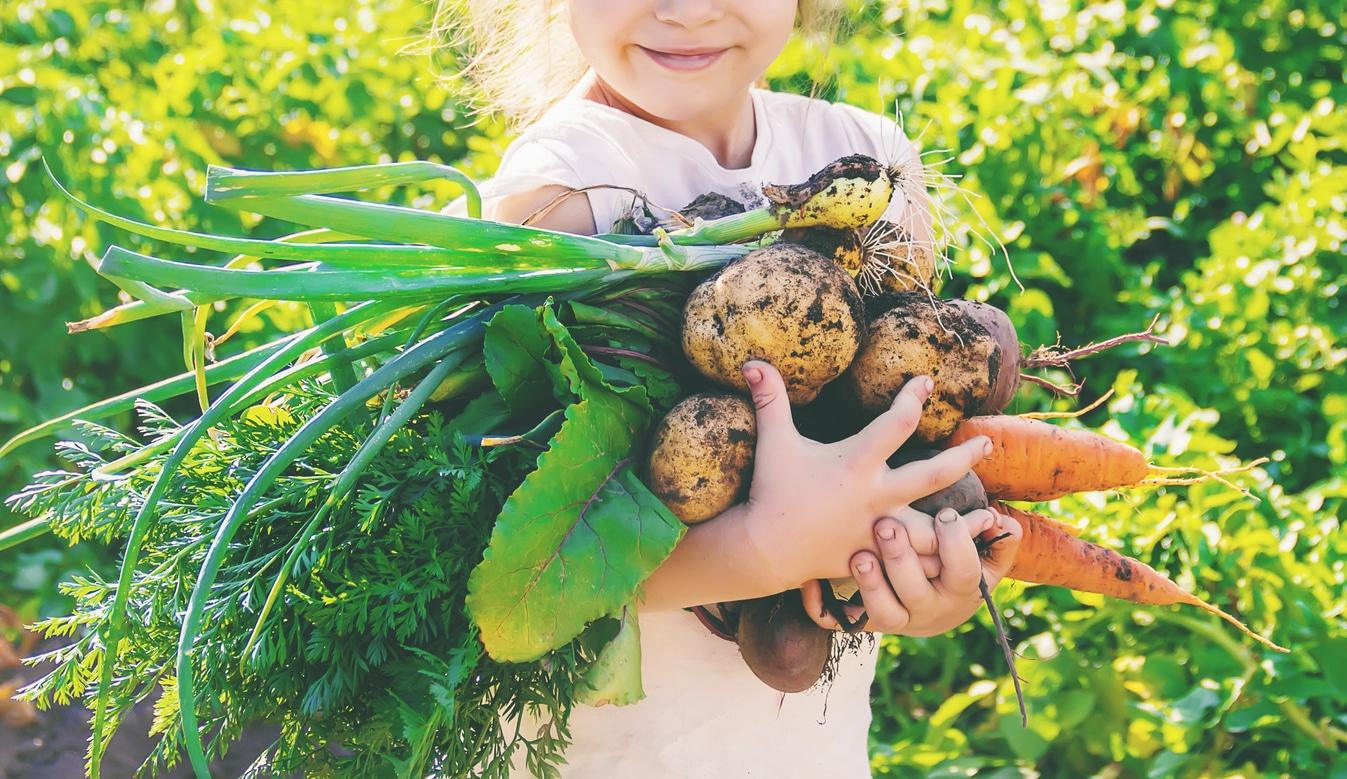 jardin potager enfant petite fille récolter fruits légumes
