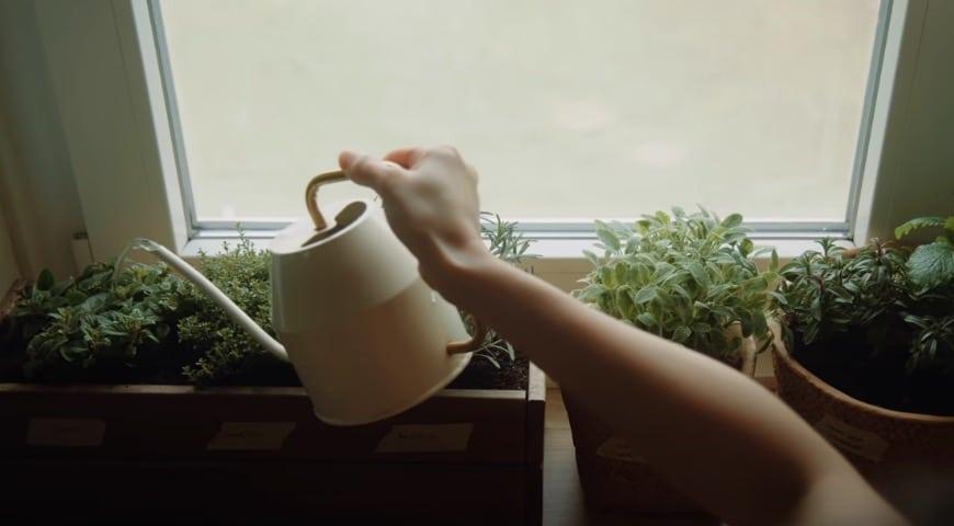arroser plantes fertilisant naturel compost bokashi
