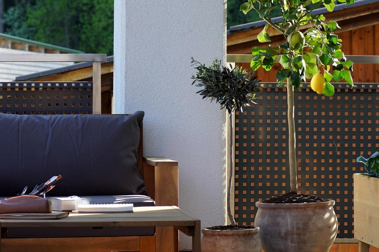 balcon citronnier plante arbre fruitier