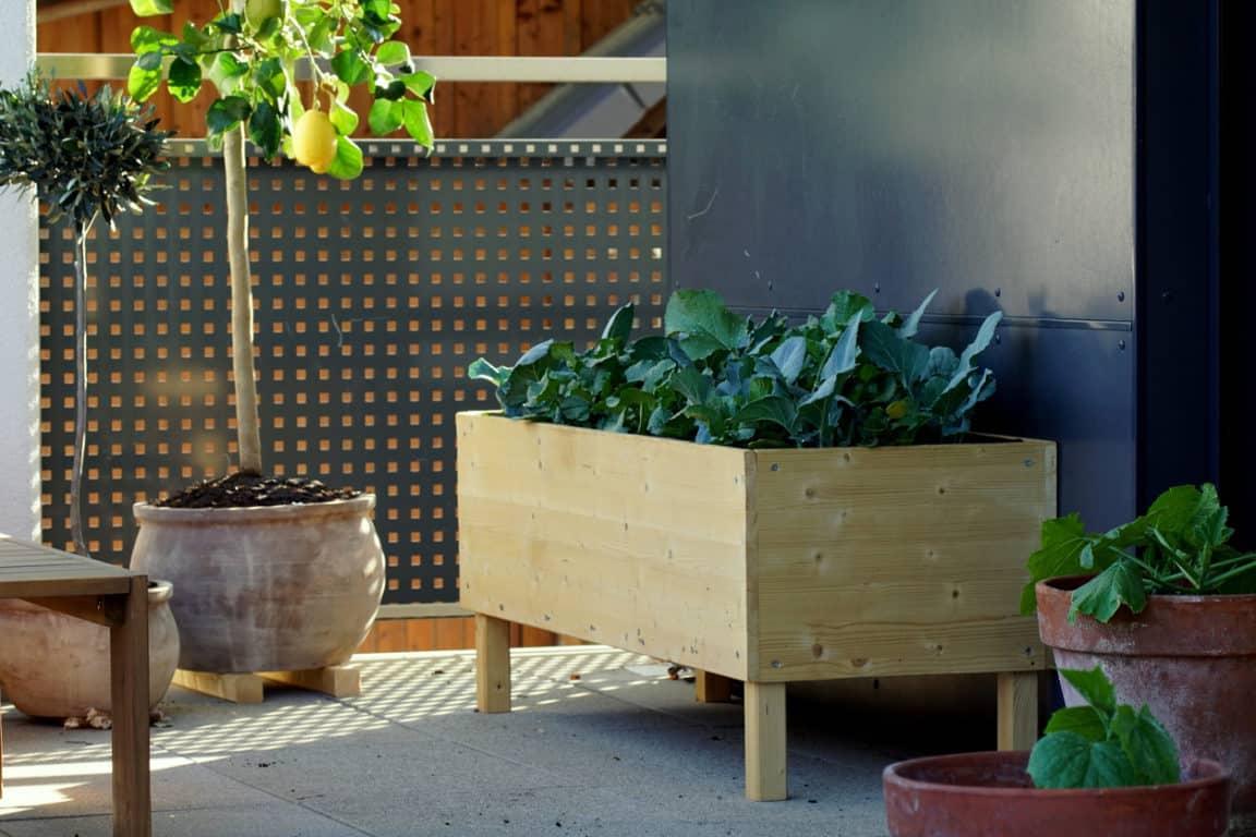balcon potager intérieur terrasse plantes vertes citron