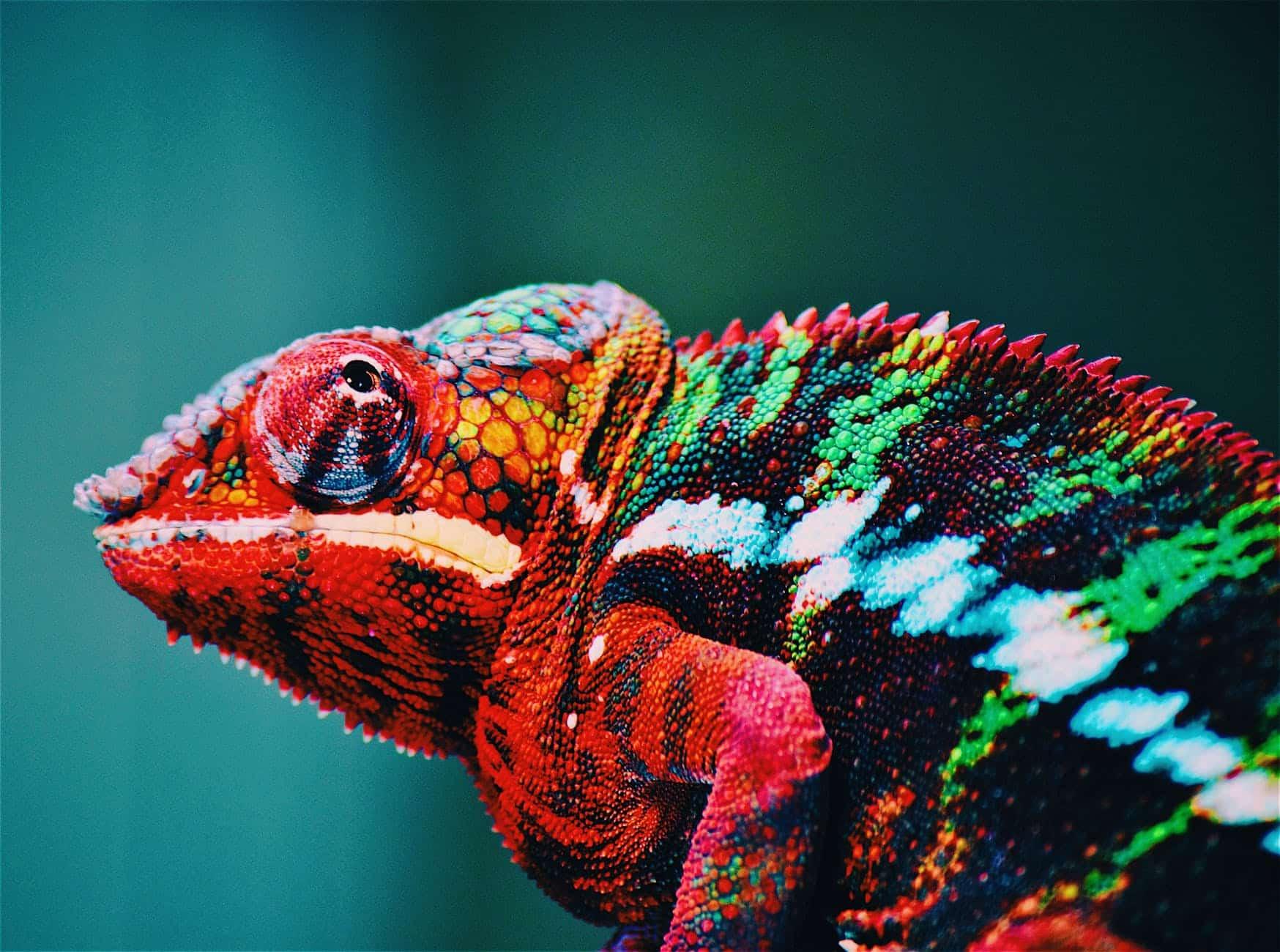 caméléon lézard animal changer couleur