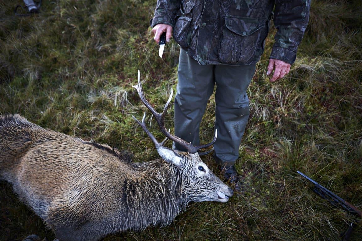 chasse chasseur cerf gibier mort interdire impacts écologiques nature