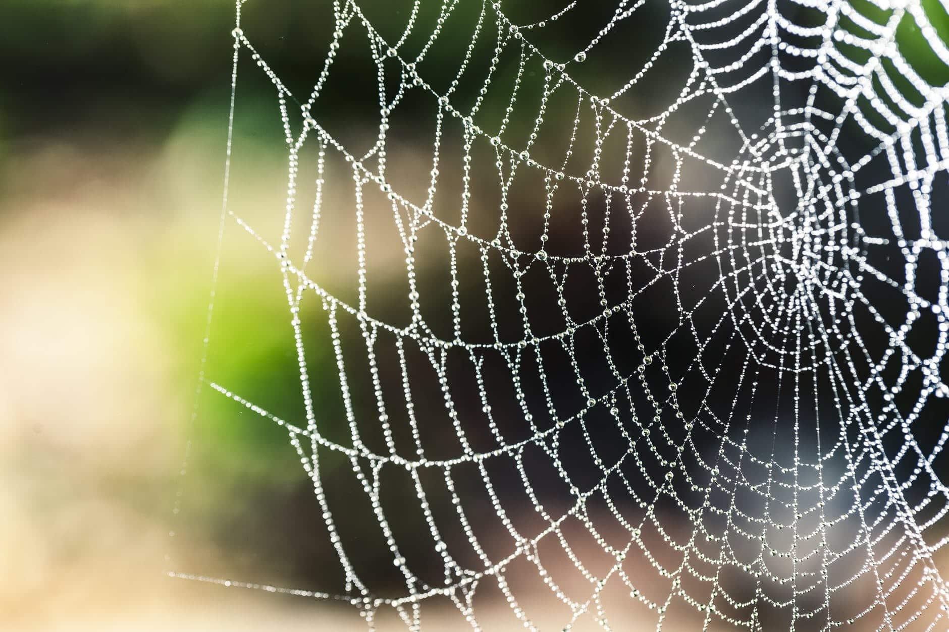 animaux super pouvoirs toile araignée fil soie eau