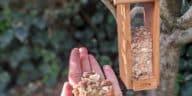 mangeoire oiseaux graines recette express noix